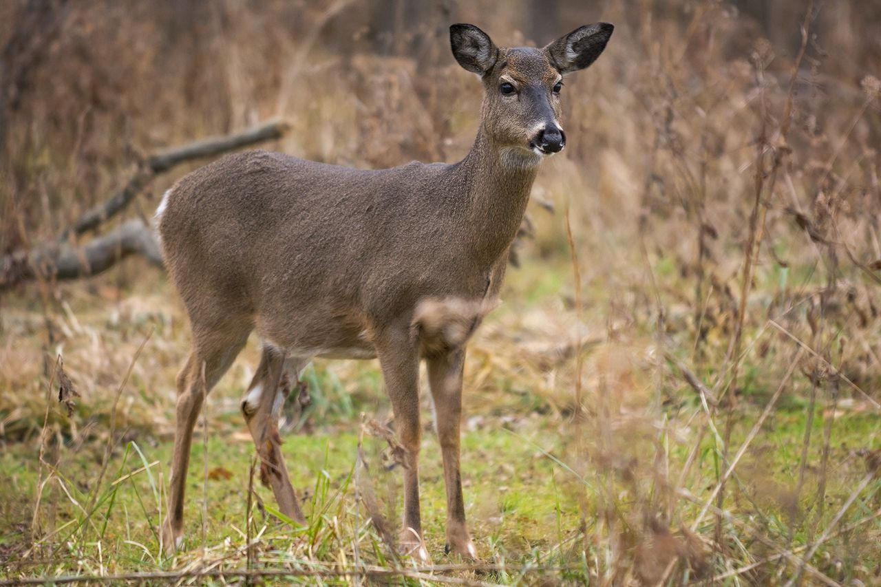 Experts: Reasons Why Upstate Ny Deer Hunting Is Off To A regarding Nys Deer Rut Prediction Dates