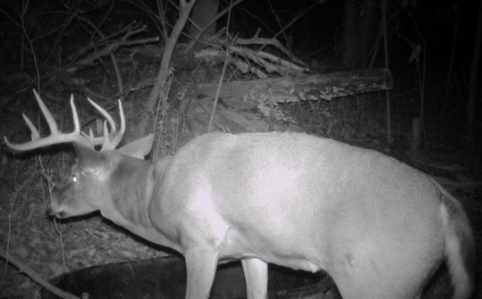 Four Weekend Whitetail Rut Guide | Whitetail Habitat Solutions for Deer Rut Schedule