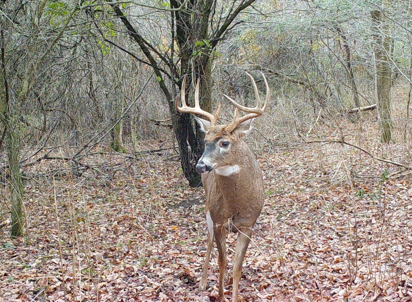Hunters Will See Post-Thanksgiving Rutting Action in When Do Whitetail Rut