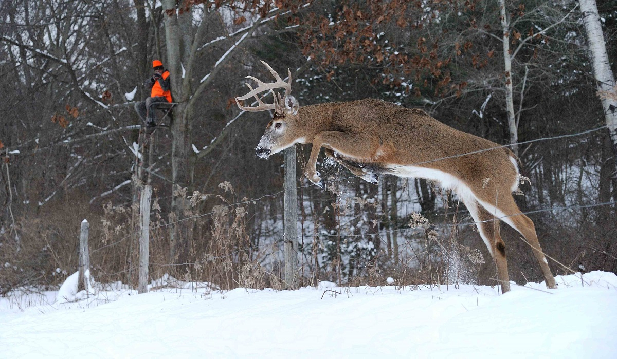 Hunting Strategies For Post Rut Bucks - Legendary Whitetails in Michigan Deer Rut Calender