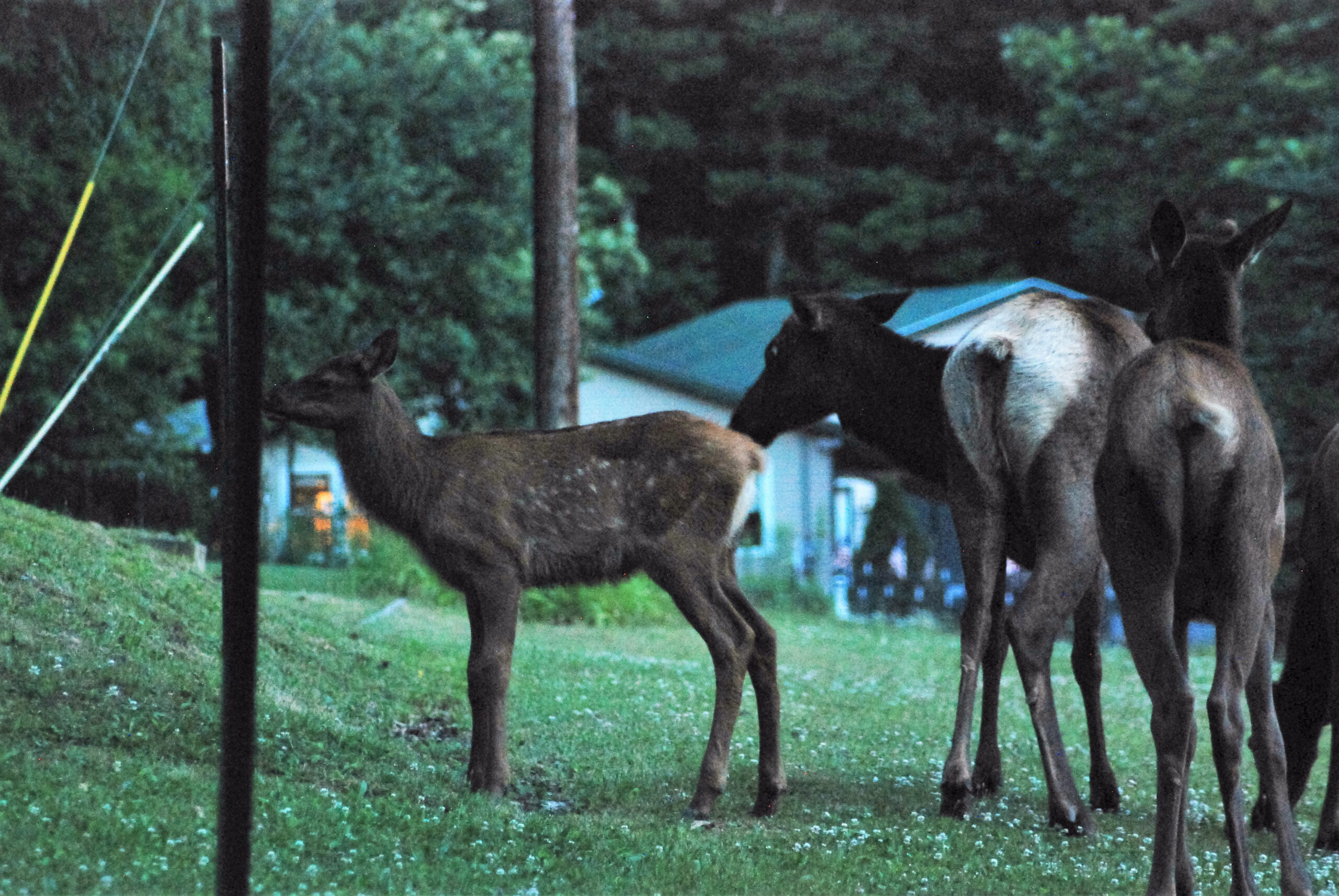 It'S Not All About The Bugle… 5 Reasons Not To Visit Elk regarding Pa Rut 2021