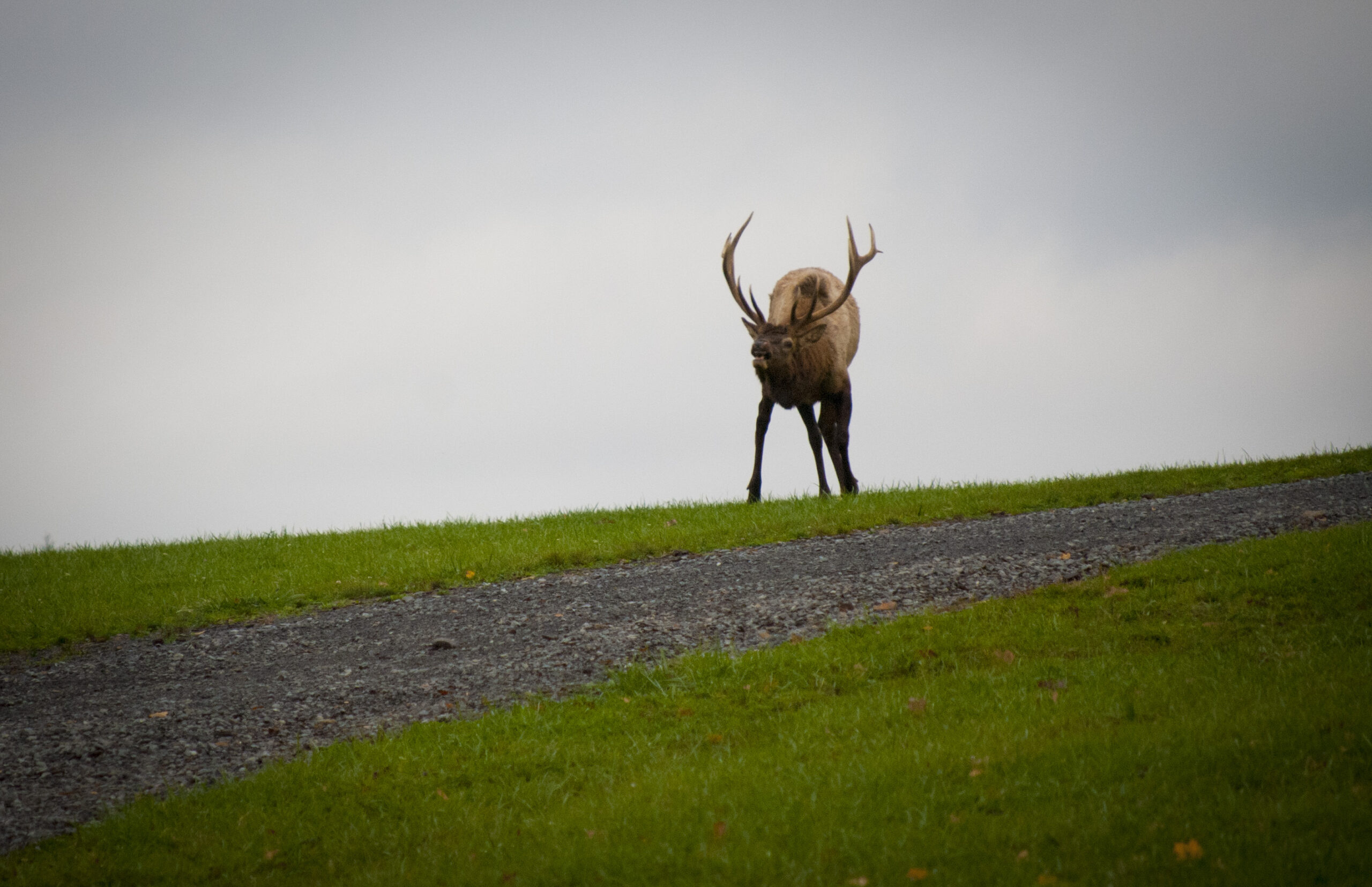 It'S Not All About The Bugle… 5 Reasons Not To Visit Elk with Pa Rut 2021