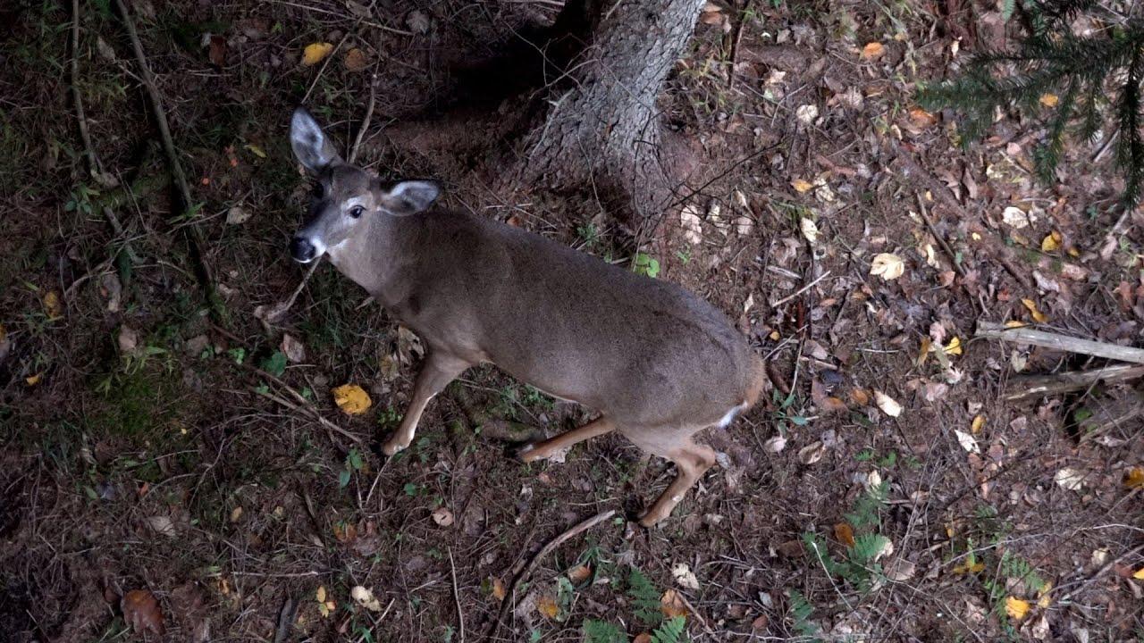 John'S Archery Rut Season 2019 - Pennsylvania Bow Hunting Whitetail Deer -  Western Pa 2D throughout Pa Deer Rut