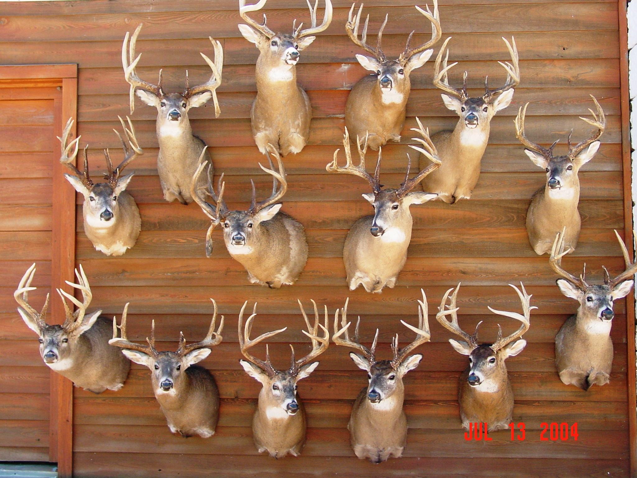 Kansas Whitetail Outfitters | Ks Deer | Hunting Kansas inside 2021 Kansas Whitetail Rut Prediction
