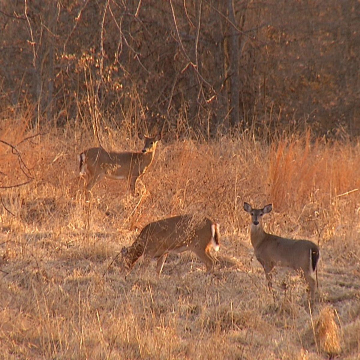 Kentucky'S Department Of Fish And Wildlife Announce Deer regarding Ky Deer Season 2021