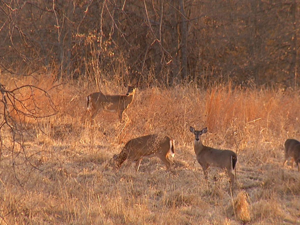 Kentucky'S Department Of Fish And Wildlife Announce Deer throughout Kentucky Deer Season 2021