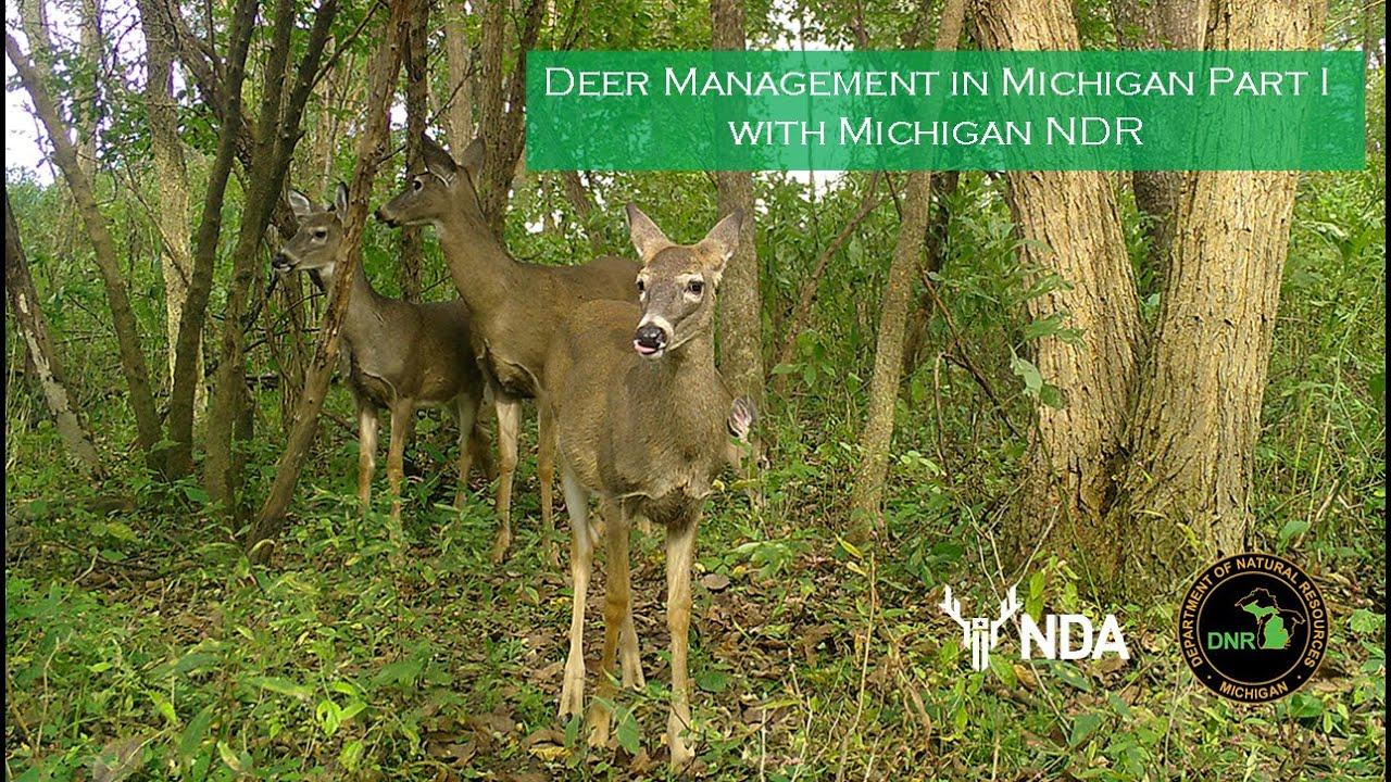 Michigan - Deer Friendly pertaining to Michigan Deer Season 2021