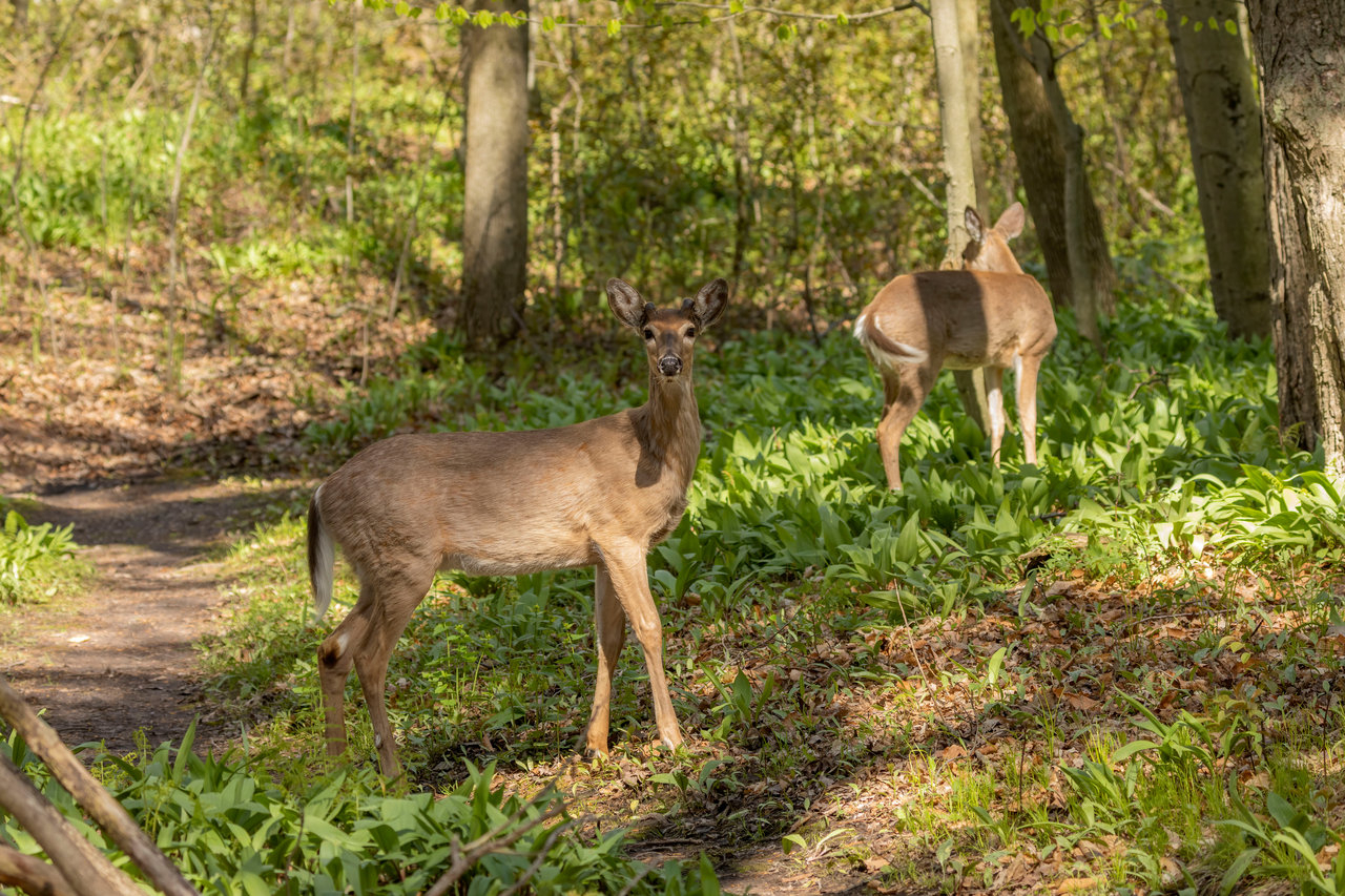 Michigan Dnr Missed Chance To Test Worker Diagnosed With Tb regarding Michigan Deer Season 2021