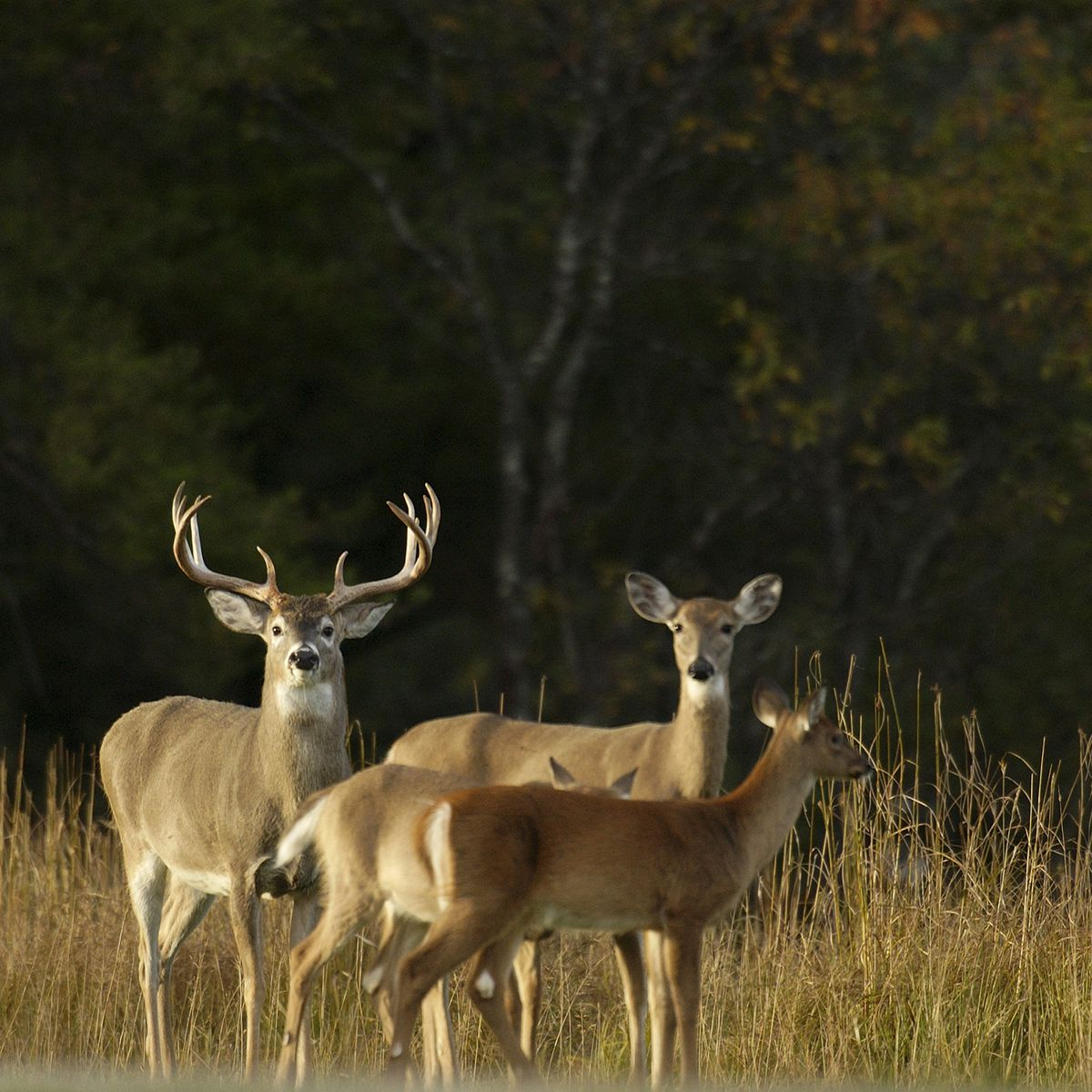 Michigan Dnr Proposing Deer Hunting Changes For 2021 intended for 2021 Rut Predictor