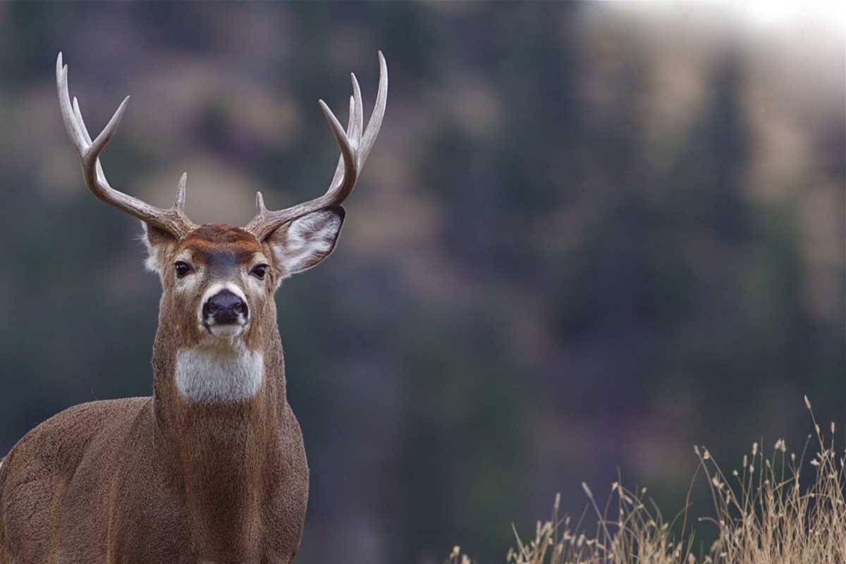 Michigan Hunters Don'T Need More Deer   Bridge Michigan intended for Michigan Deer Season 2021