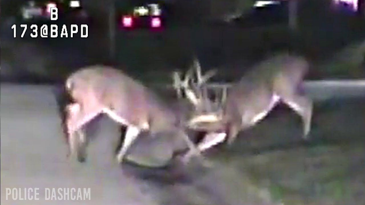Ohio - Deer Friendly inside Ohio Whitetail Rut 2021