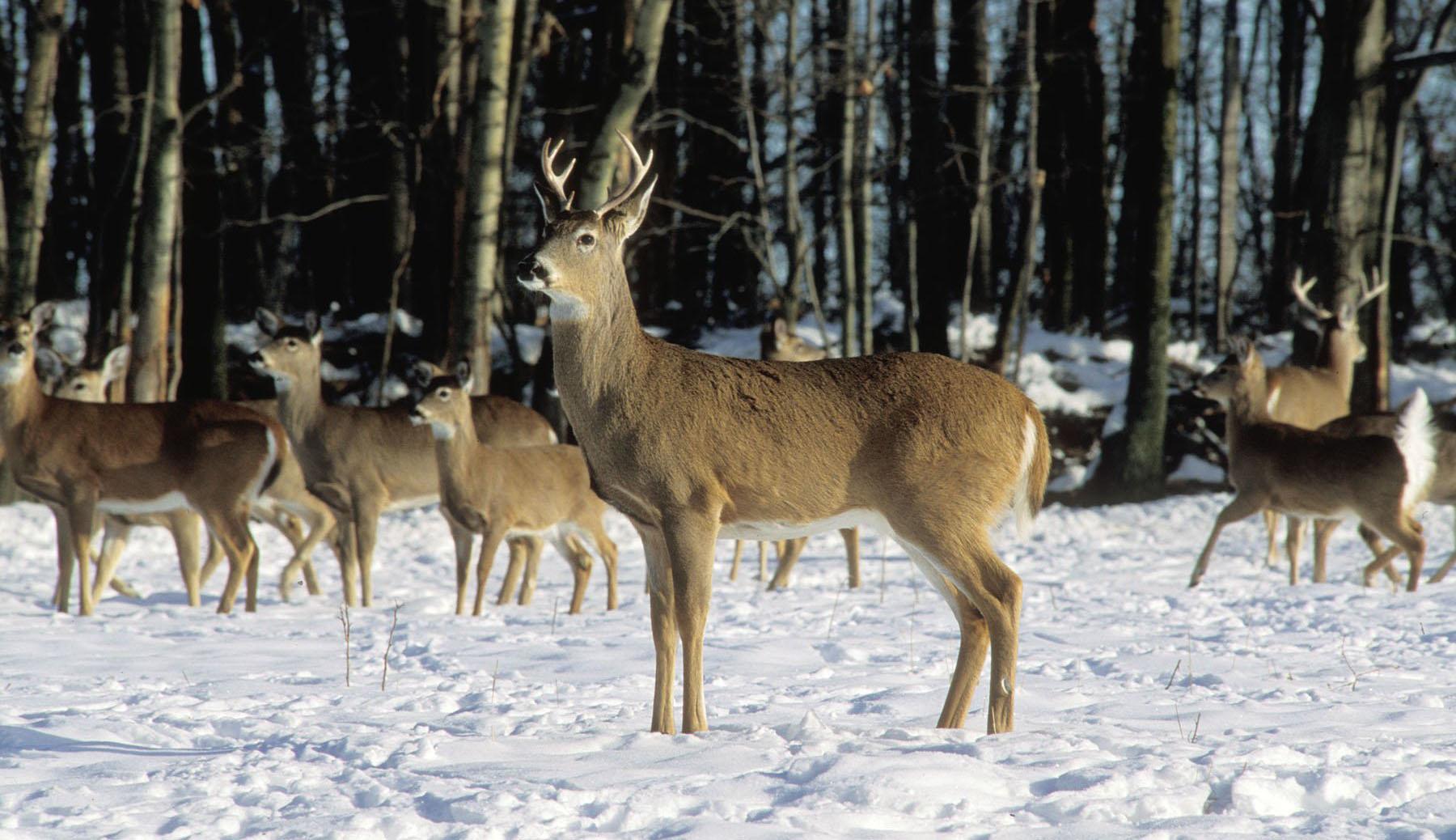 Opening Day Of Deer Hunting Season In Michigan Brings pertaining to Michigan Deer Season 2021