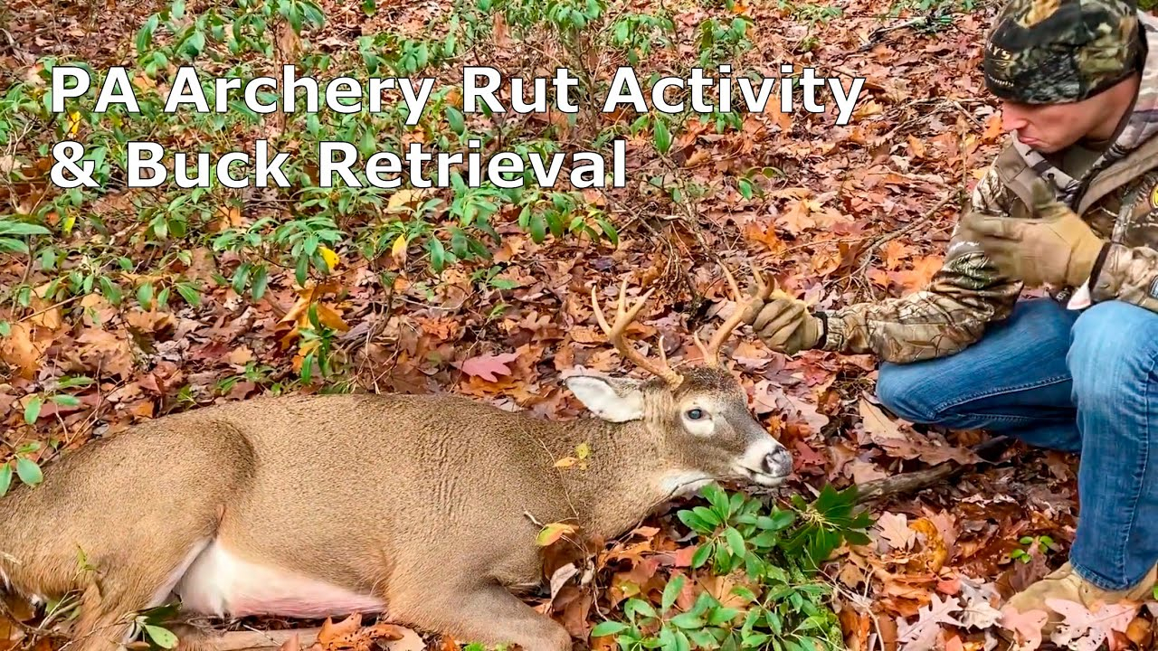 Pa Archery Hunting Rut Activity & Buck Retrieval throughout Pa Deer Rut