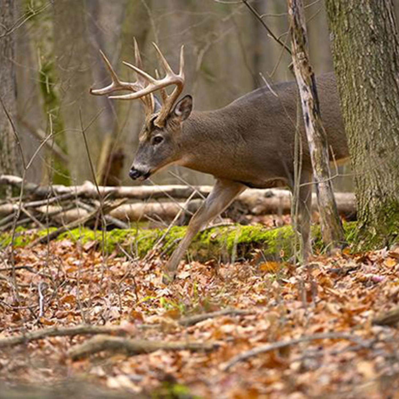 Pa Rut Report'S Hunting, Fishing And Outdoors for Pa Deer Rut