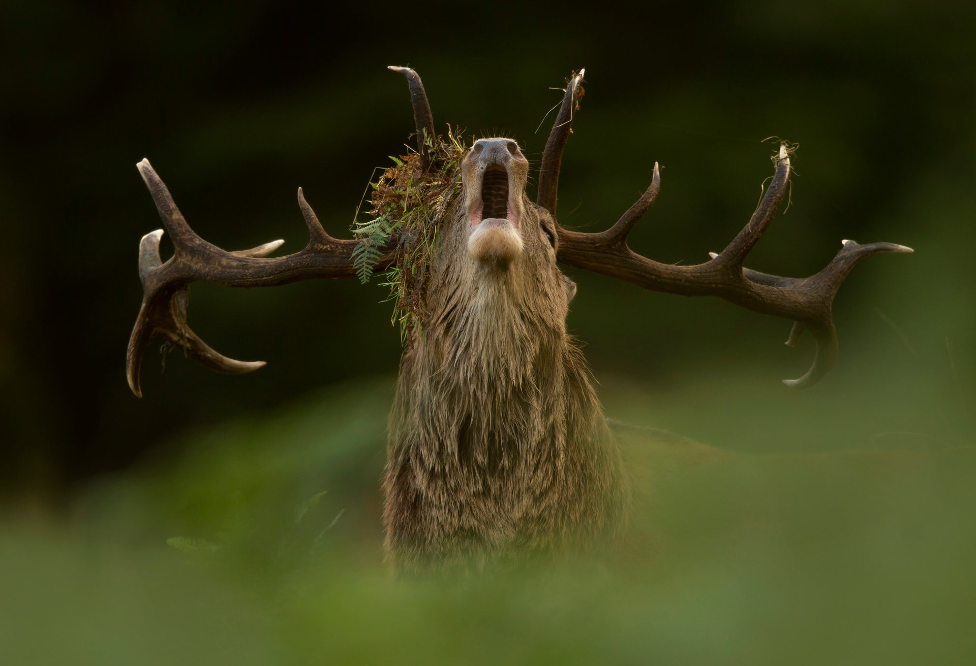 Red Deer Photo Workshop - Danny Green Photography pertaining to Bradgate Deer Rut 2021