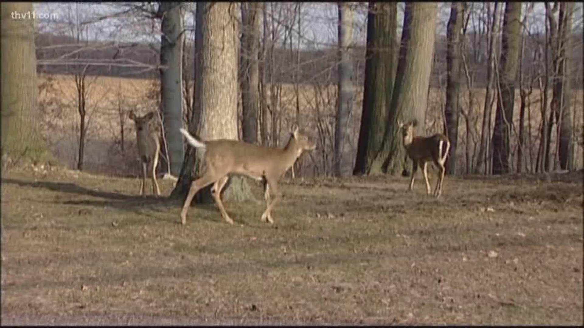 Taking Precautions During Deer-Hunting Season inside Pa Deer Season 2021