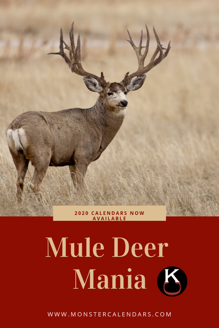 The Mighty And Regal Mule Deer, The Most Sought After pertaining to 2021 Deer And Deer Hunting Rut Calendar