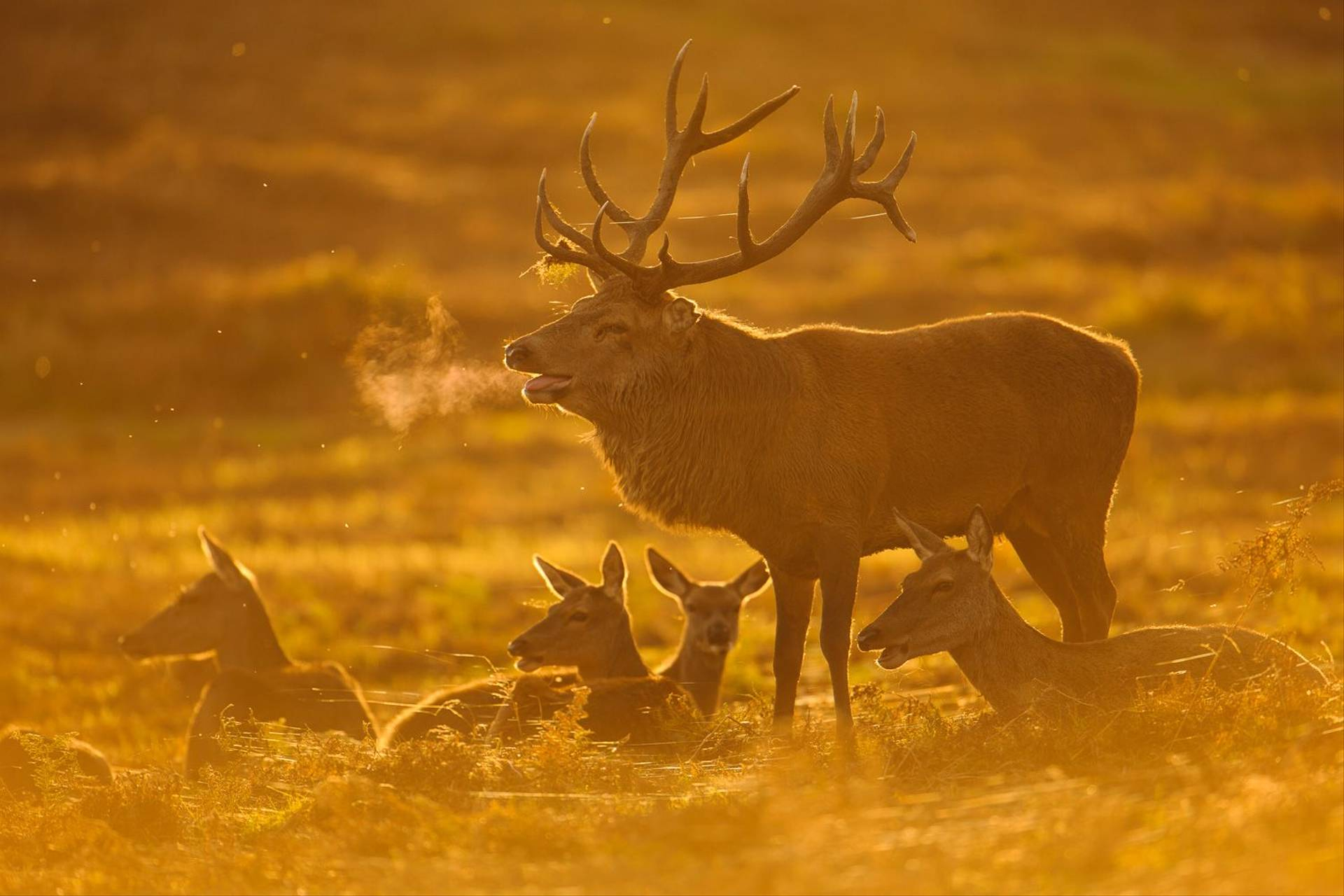 The Red Deer Rut At Bradgate Park (Wildlife Photography Day with Bradgate Deer Rut 2021