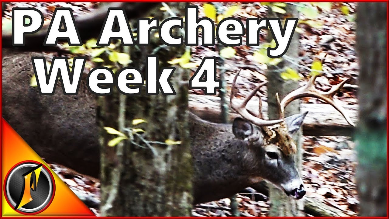 The Rut Is Heating Up In Pa! | Pa Archery Hunting with regard to Pa Deer Rut