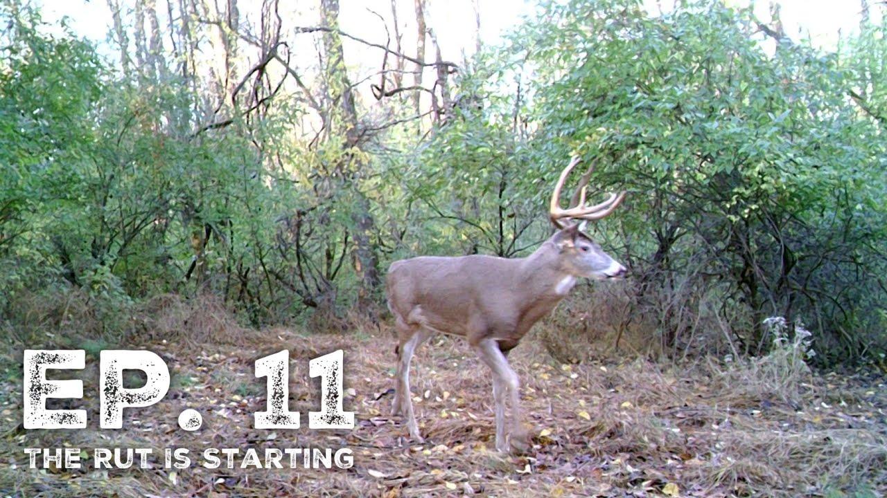 The Rut Is Starting! - Pa Archery Season 2019 Ep. 11 regarding Pa Deer Rut