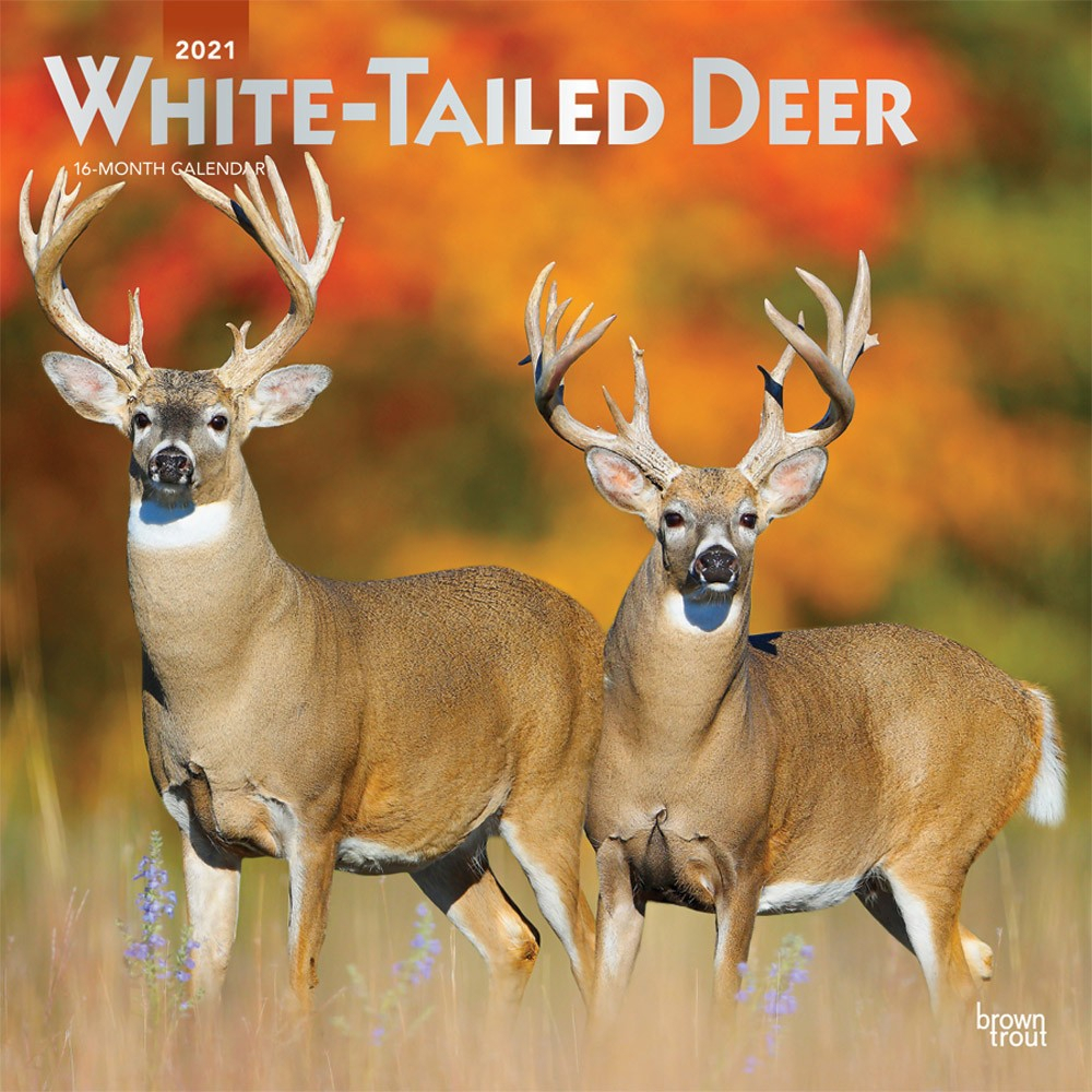 White Tailed Deer 2021 12 X 12 Inch Monthly Square Wall for Deer Hunting Calendar 2021