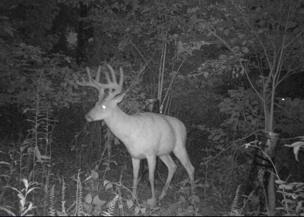 Whitetail Rut Archery Hunt 2021 regarding 2021 Ohio Deer Rut