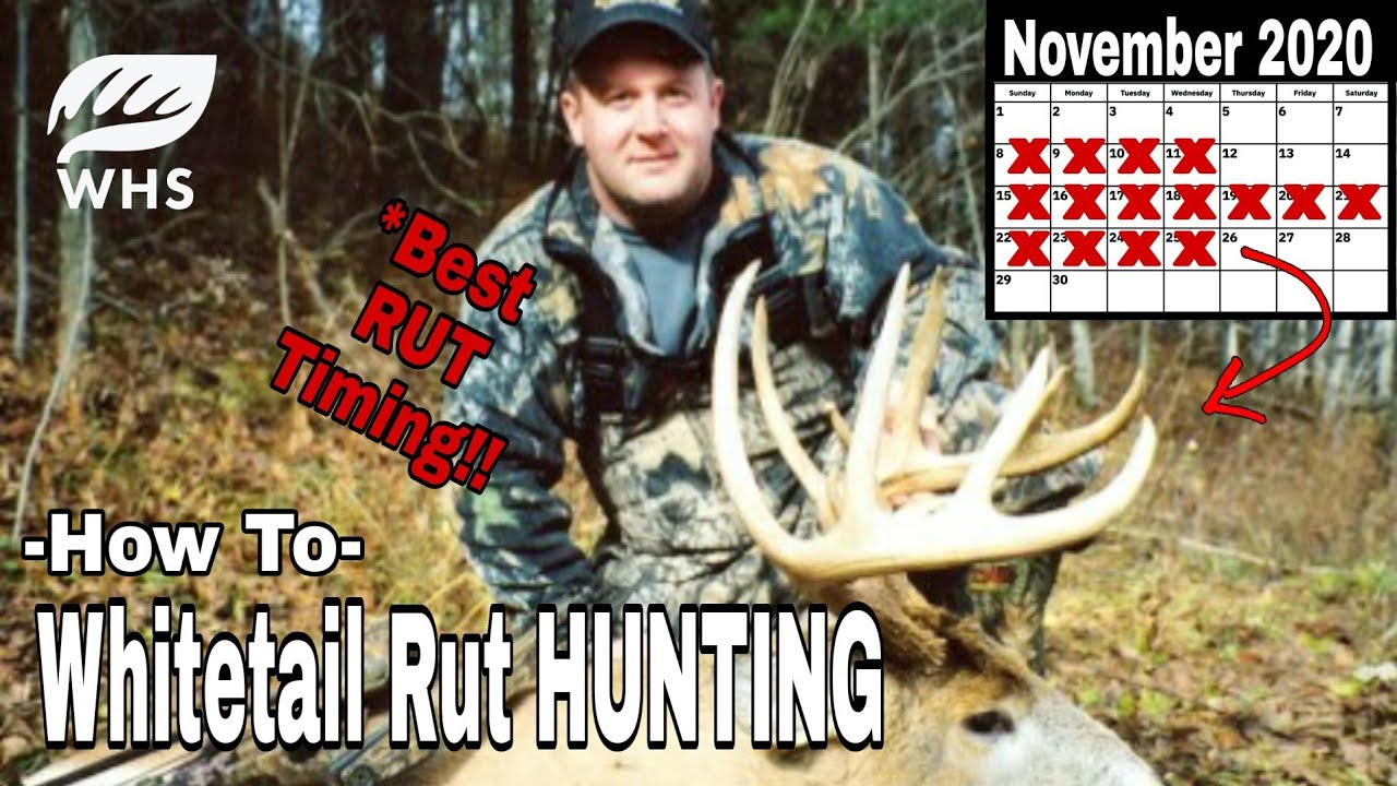 Whitetail Rut Hunt Timing Tips within Deer Rut Schedule