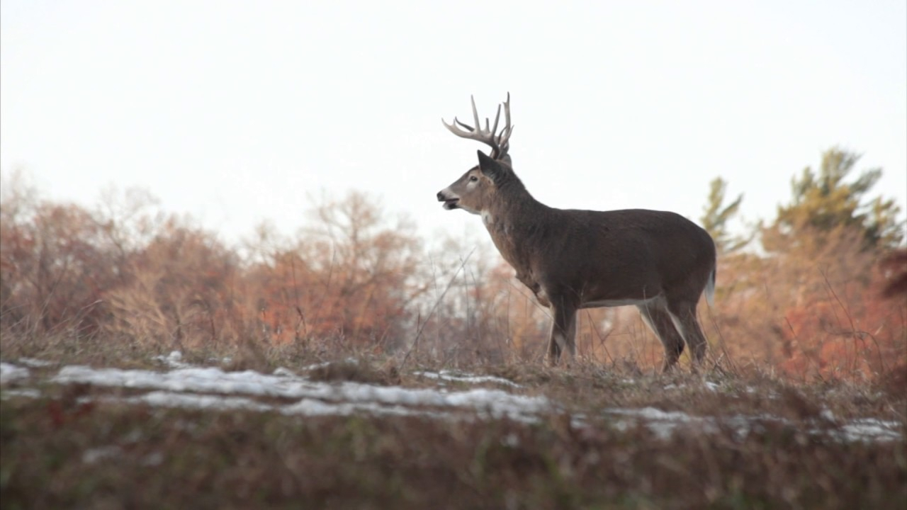 Whitetail Rut: Three Things You Need To Know throughout Michigan Deer Rut Calender