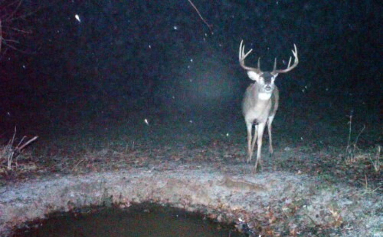 Whitetail Rut Weather Guide | Whitetail Habitat Solutions in When Do Whitetail Rut