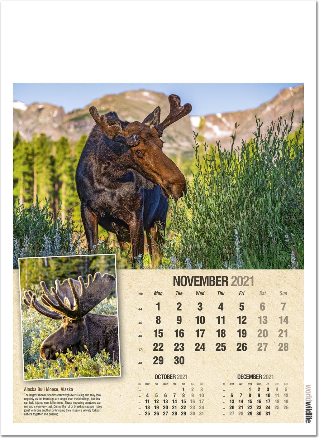 World Wildlife Wall Calendar 2021 - Rose Calendars throughout Rut Calendar 2021