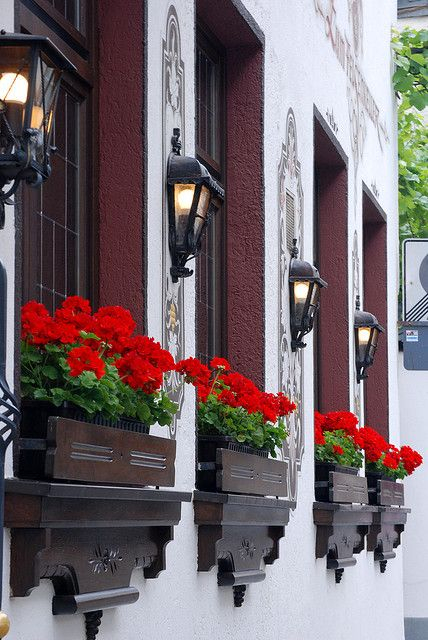 150 Red Geraniums Make Me Happy Ideas In 2021   Red in The Cozy Red Cottage 2021