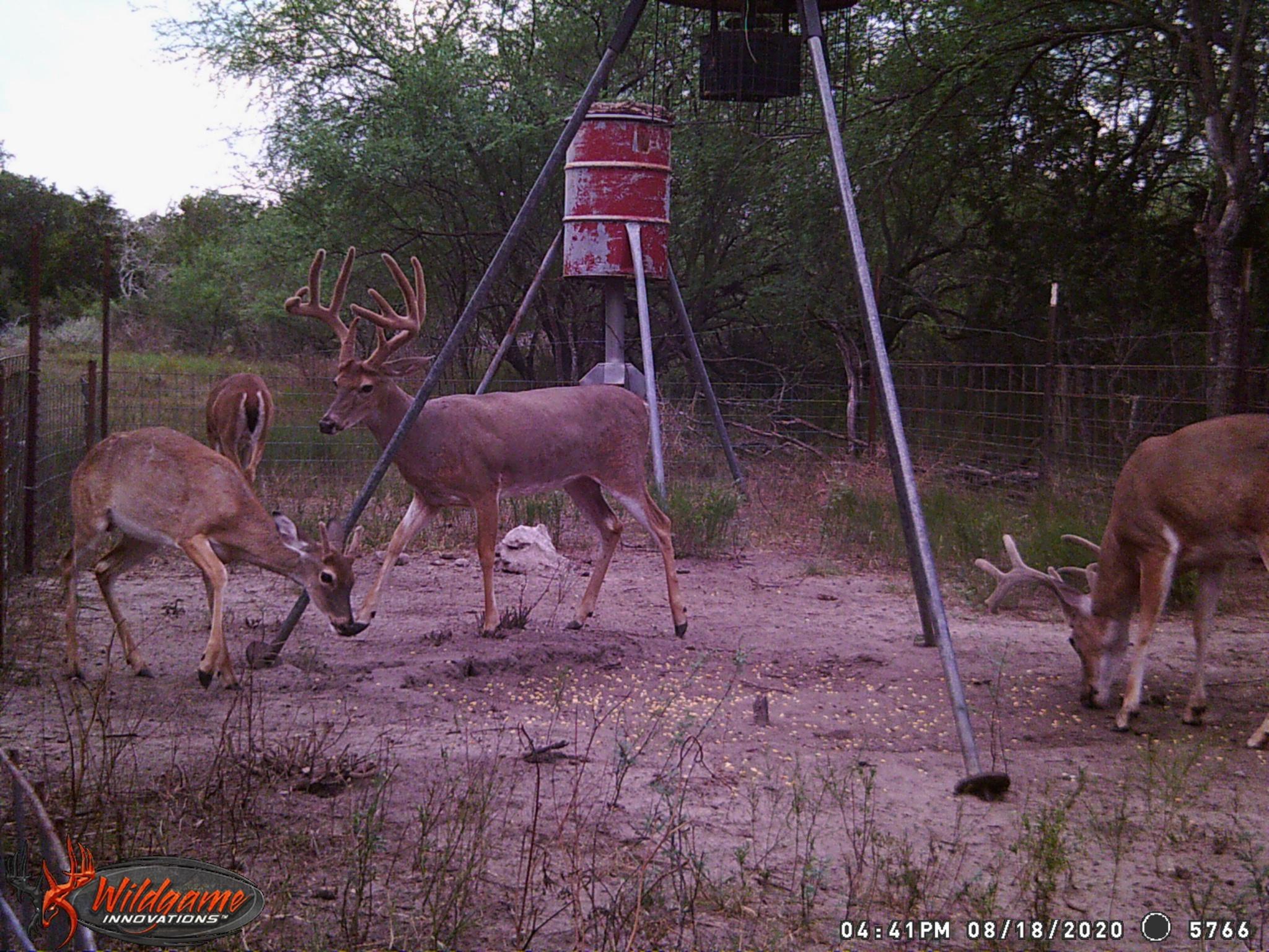 2020/2021 Deer Hunting Pics Thread - Page 1 - Ar15 for Alabama Deer Rut 2021