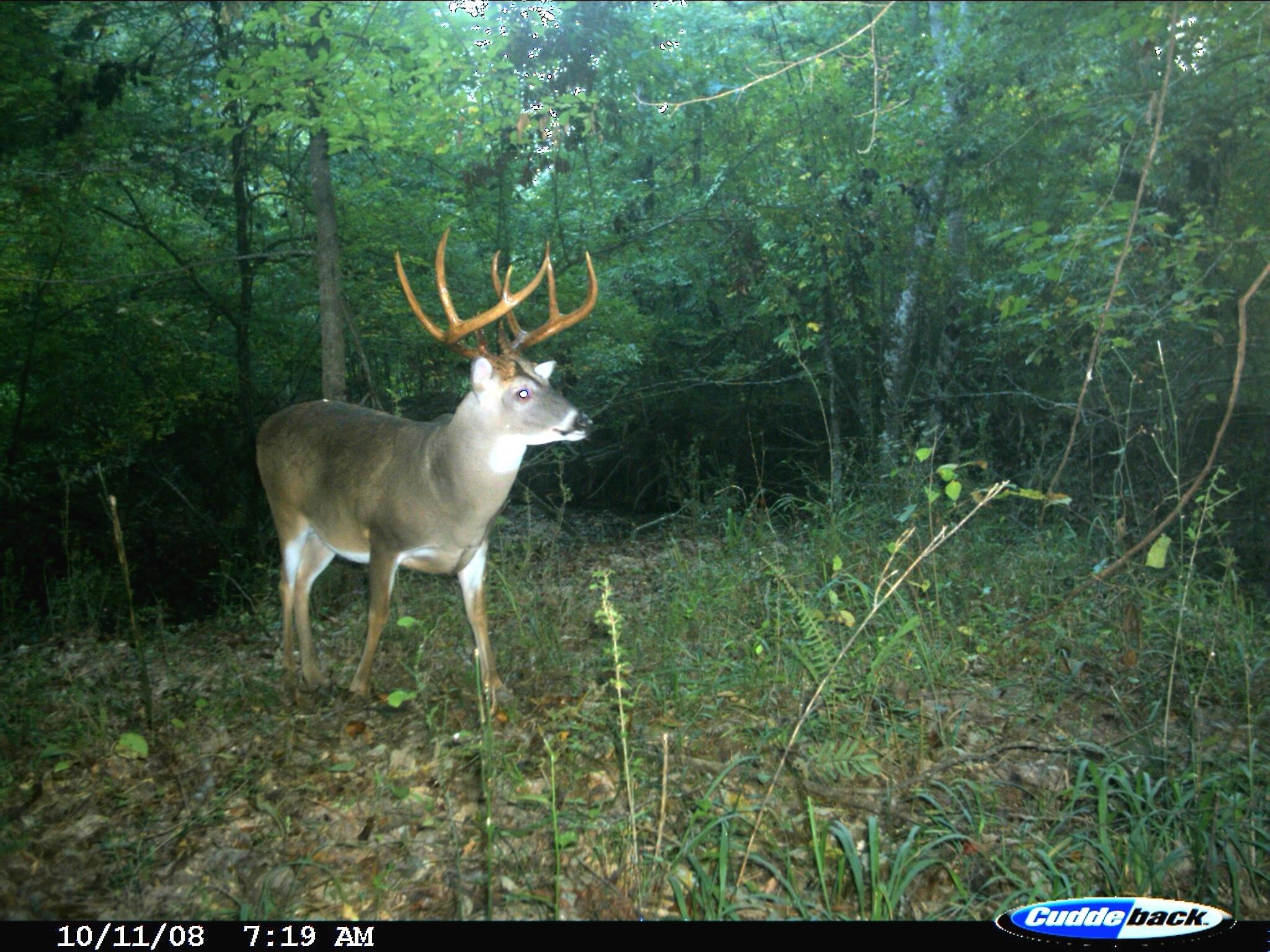 2020 Deer Rut Prediction - Template Calendar Design inside Georgia Deer Rut Map