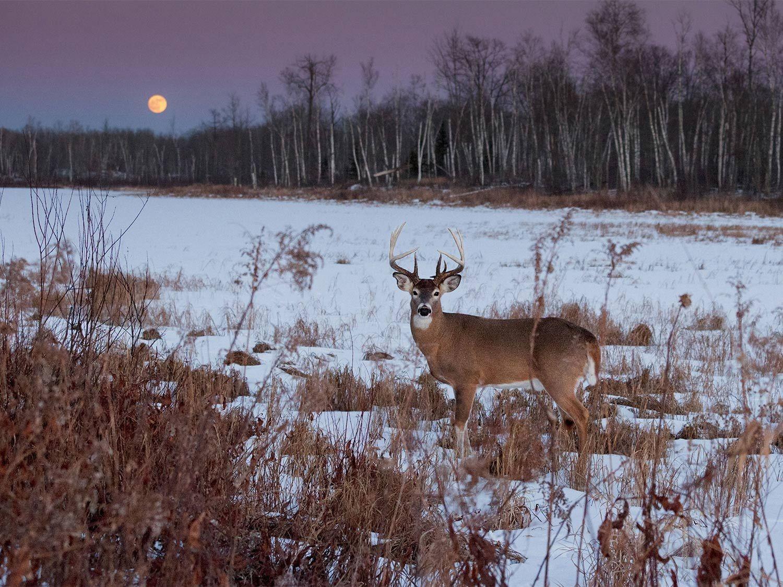 2021 Deer And Deer Hunting Rut Calendar   Calendar intended for Georgia Deer Rut Map