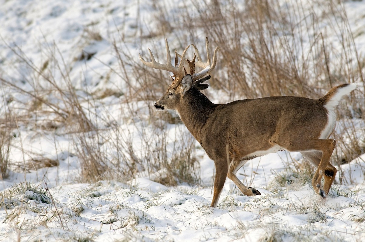2021 Deer And Deer Hunting Rut Calendar   Calendar with 2021 Illinois Whitetail Rut Calendar