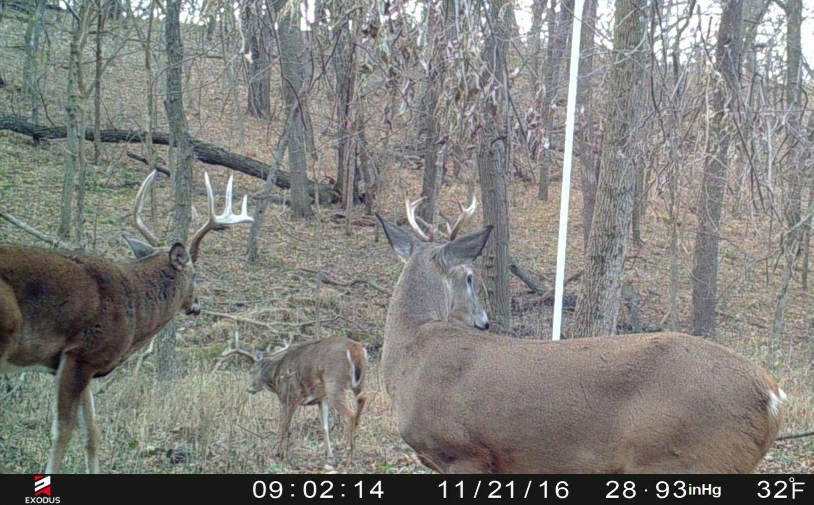 2021 Deer Rut Calendar | Calendar Printables Free Blank with Deer Rut 2021 Ohio