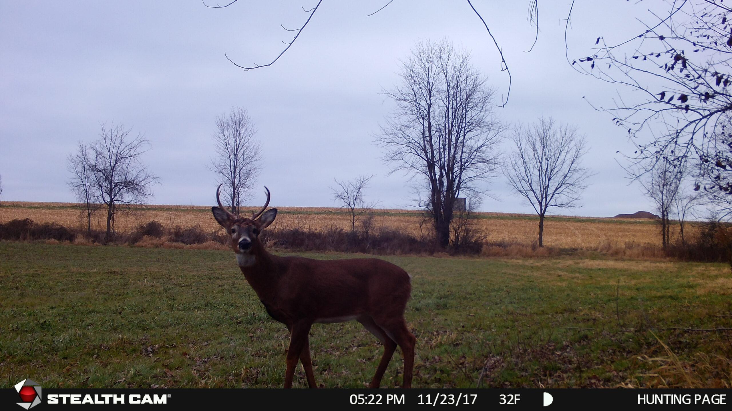 2021 Deer Rut Predictions | Calendar Printables Free Blank regarding 2021 Whitetail Rut Predictions