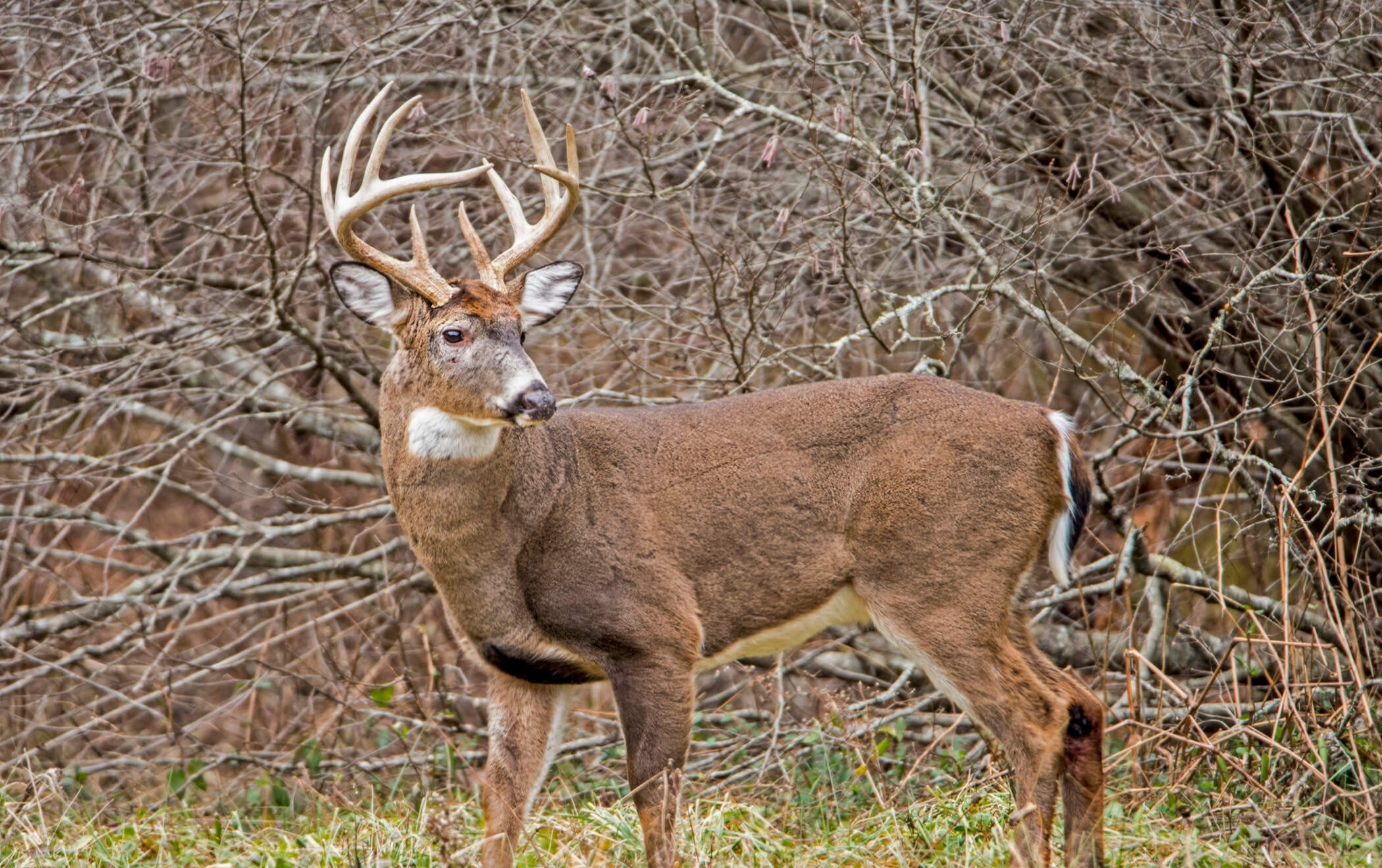 2021 Iowa Whitetail Rut   Calendar Template Printable pertaining to Deer Rut 2021 Illinois