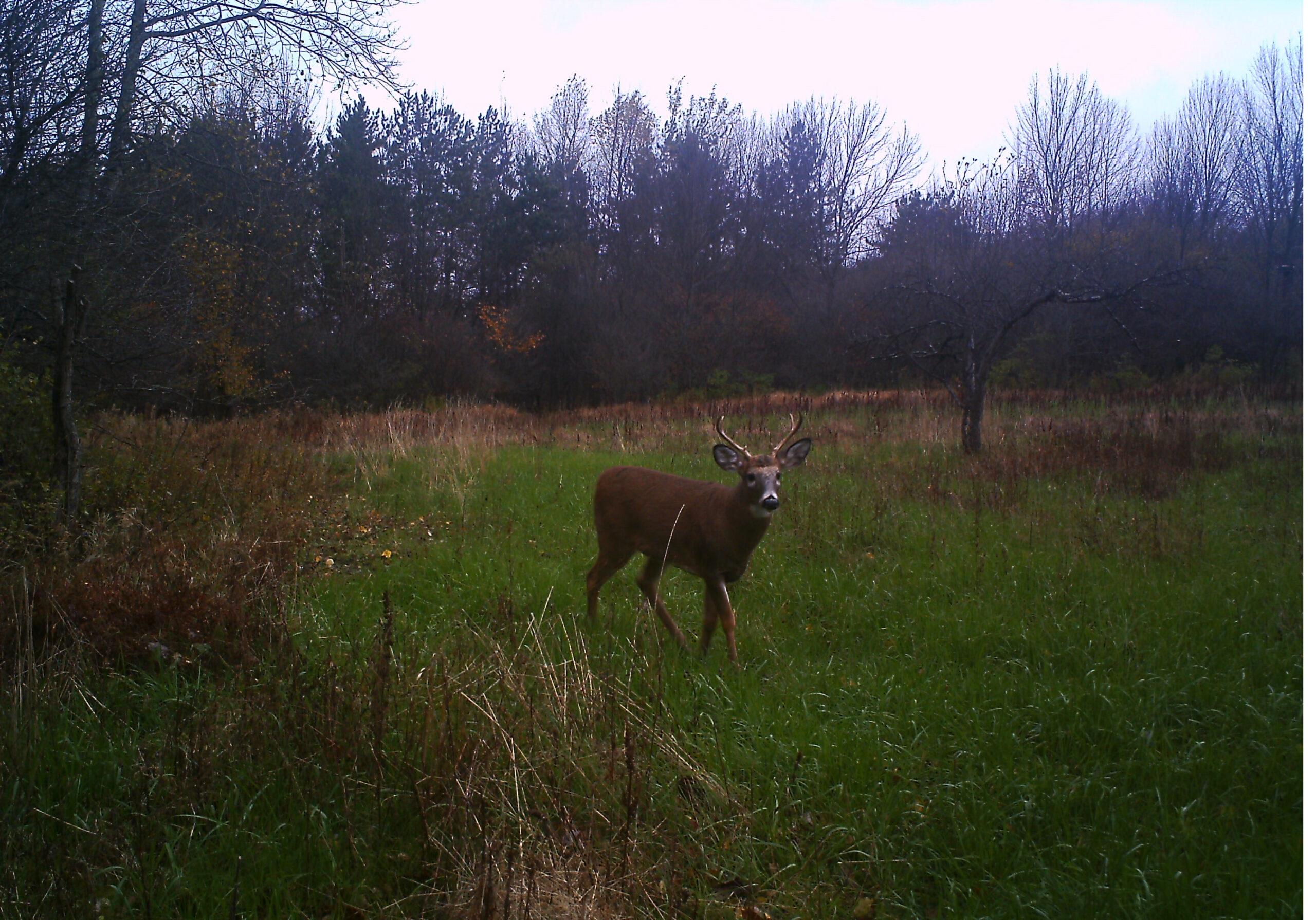 2021 Whitetail Deer Rut Predictions | Calendar Printables Free Blank pertaining to Deer Rut Forcast Indiana 2021