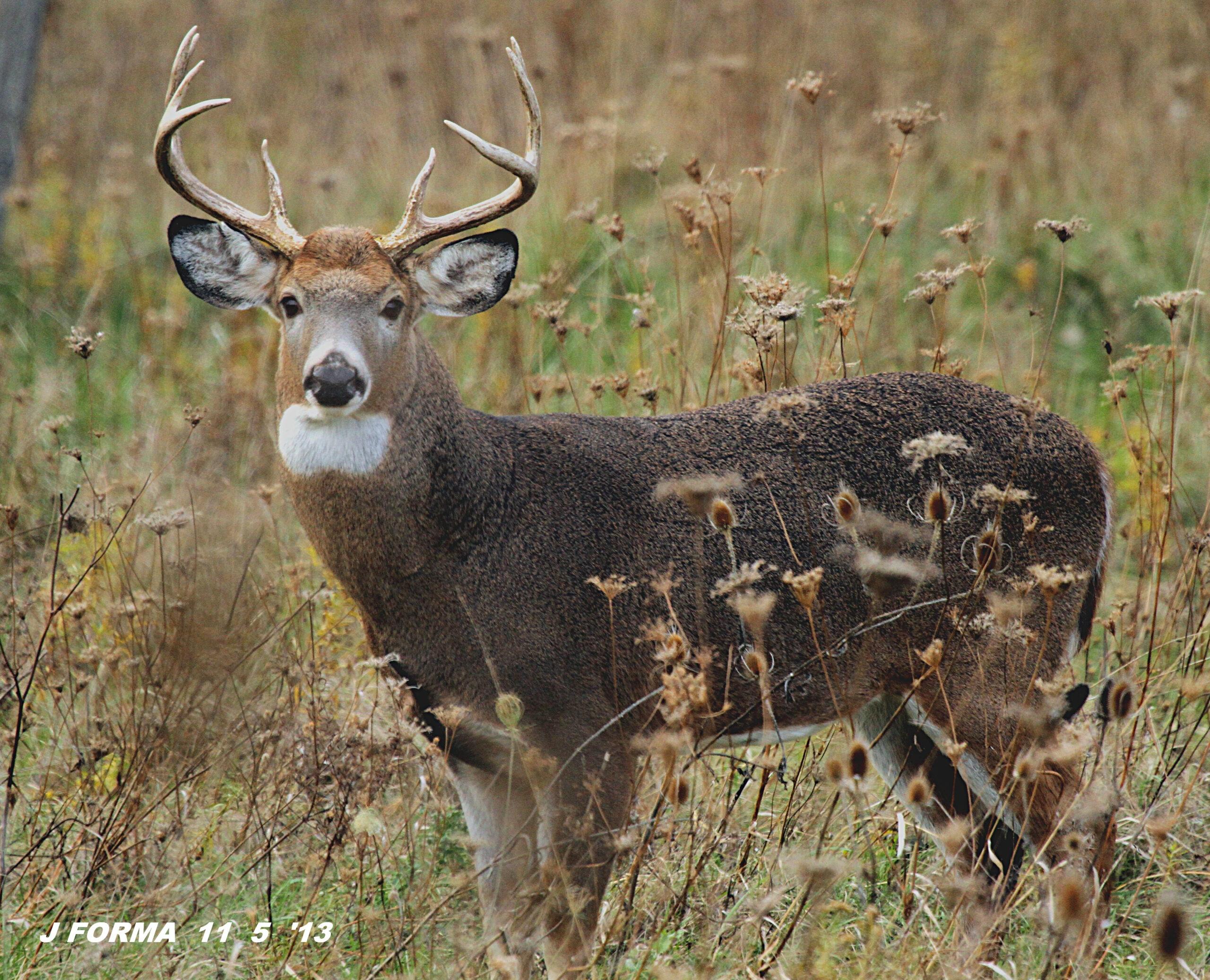 2021 Wny Whitetail Deer Rut   Calendar Printables Free Blank intended for 2021 Deer Season In Kentucky