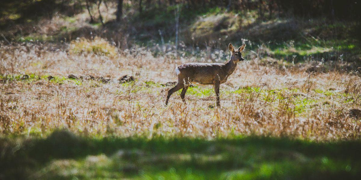 Above Average Season Expected For Texas Deer Hunters intended for Michigan Deer Rut 2021
