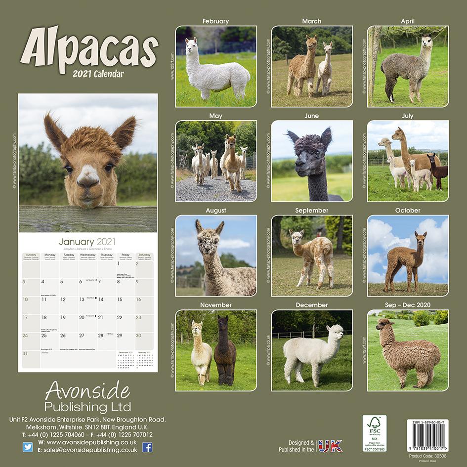Alpacas 2021 Calendar throughout 2021 Calendar Printable Large Squares