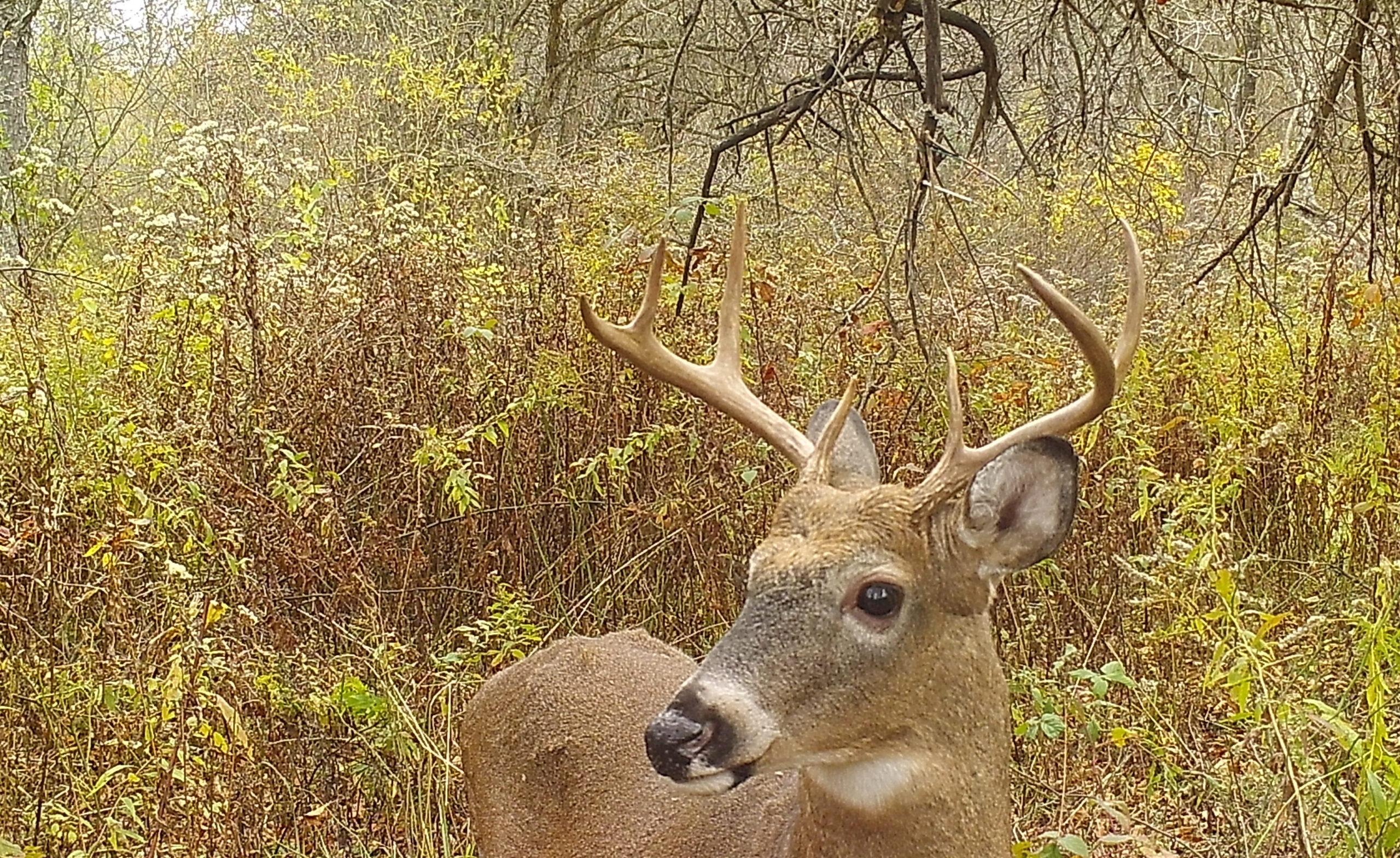 Deer And Deer Hunting Rut Forecast Nys | Calendar throughout Rut Habitat 2021