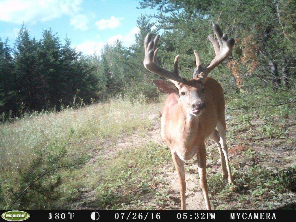 Deer Rut 2020 - Template Calendar Design with Rut Habitat 2021