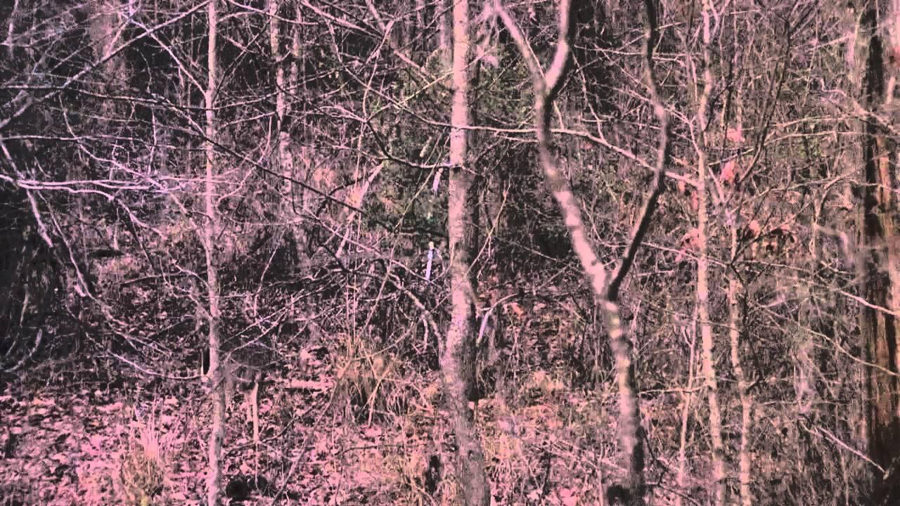 Deer Rut Activty In Alabama - Youtube pertaining to Alabama Deer Rut 2021