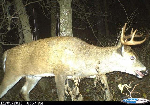 Deer Rut Predictions For Wi 2021   Calendar Template Printable in Rut Habitat 2021
