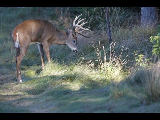 Deer Rut Predictions For Wi 2021 | Calendar Template Printable within Rut Habitat 2021