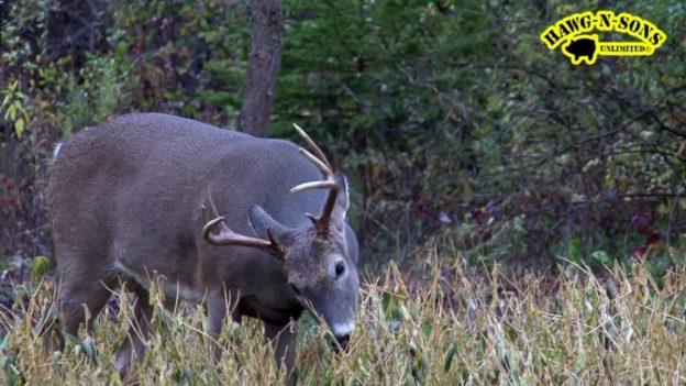 Hunting Rutting Whitetail Deer - Self-Filmed Bow Hunt intended for Michigan Deer Rut 2021
