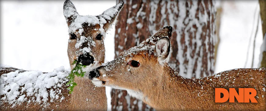 Indiana Hunting Seasons & Regulations - 2020 | Eregulations inside Indiana Deer Season 2021