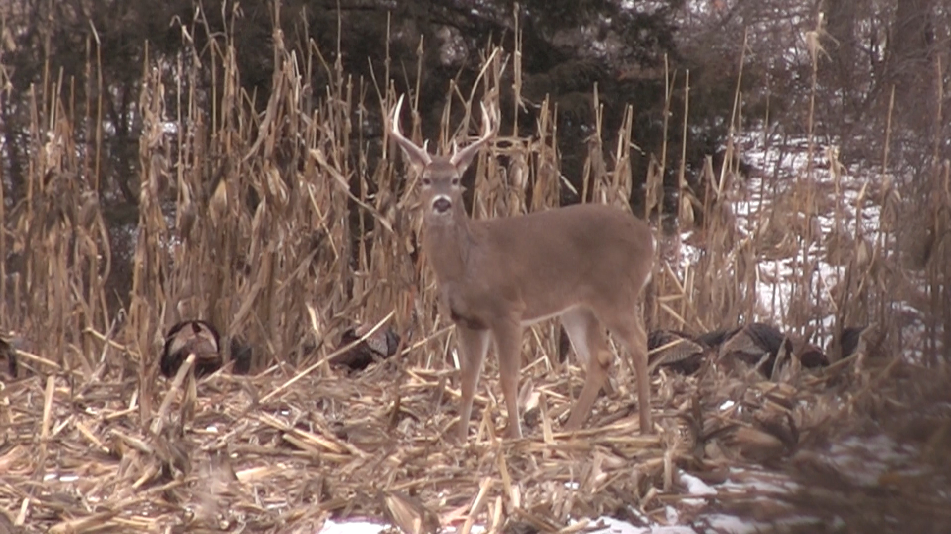 Should Hunters Expect To See Fewer Deer In 2014 Because Of inside Michigan Deer Rut 2021
